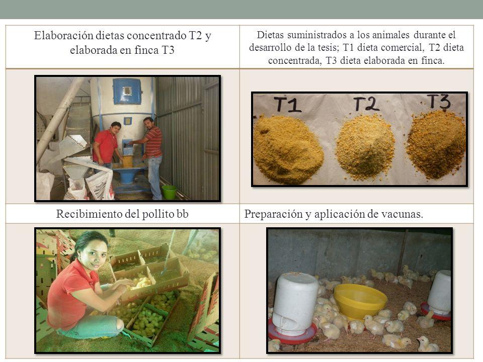 Elaboración dietas concentrado T2 y elaborada en finca T3