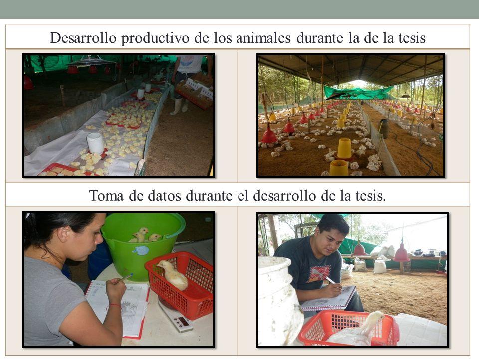 Desarrollo productivo de los animales durante la de la tesis