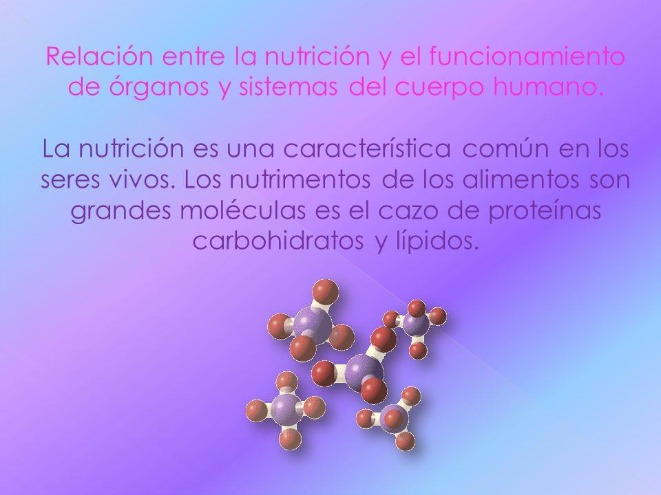 Relación entre la nutrición y el funcionamiento de órganos y sistemas del cuerpo humano.