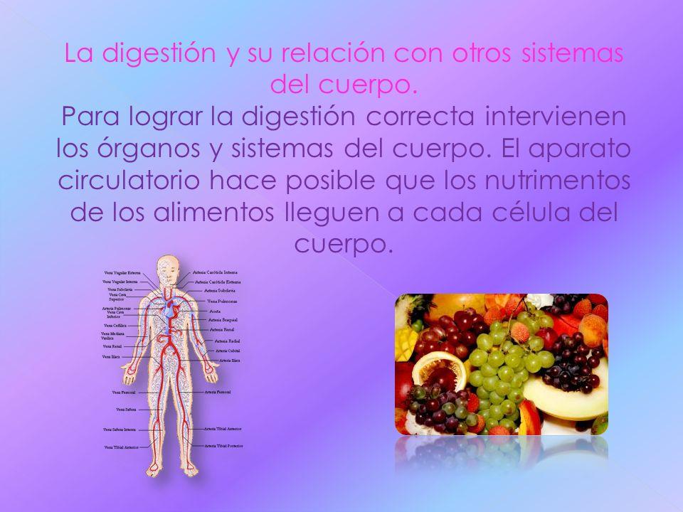 La digestión y su relación con otros sistemas del cuerpo.