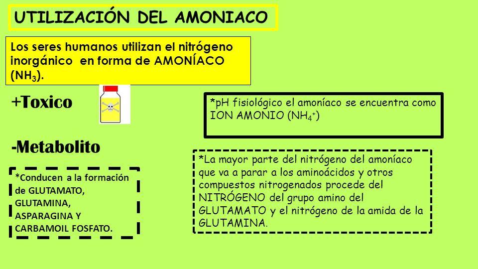 +Toxico -Metabolito UTILIZACIÓN DEL AMONIACO