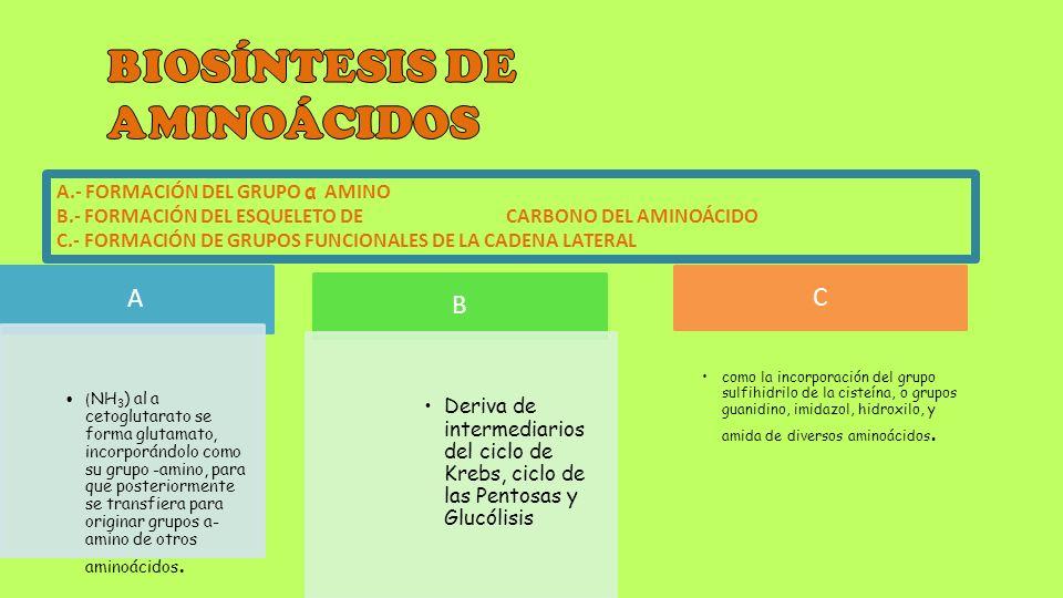 BIOSÍNTESIS DE AMINOÁCIDOS