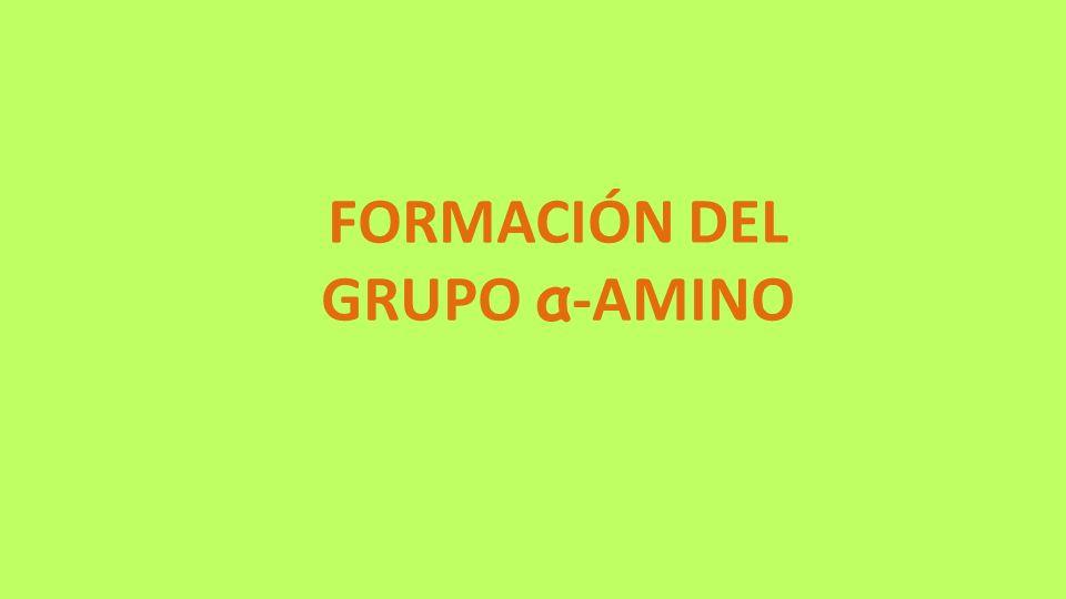 FORMACIÓN DEL GRUPO α-AMINO