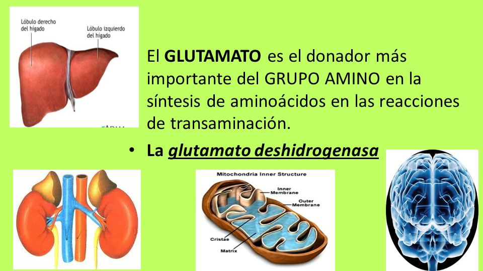 El GLUTAMATO es el donador más importante del GRUPO AMINO en la síntesis de aminoácidos en las reacciones de transaminación.