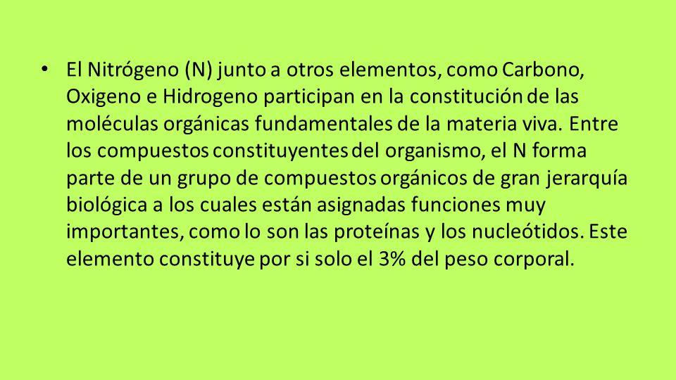 El Nitrógeno (N) junto a otros elementos, como Carbono, Oxigeno e Hidrogeno participan en la constitución de las moléculas orgánicas fundamentales de la materia viva.