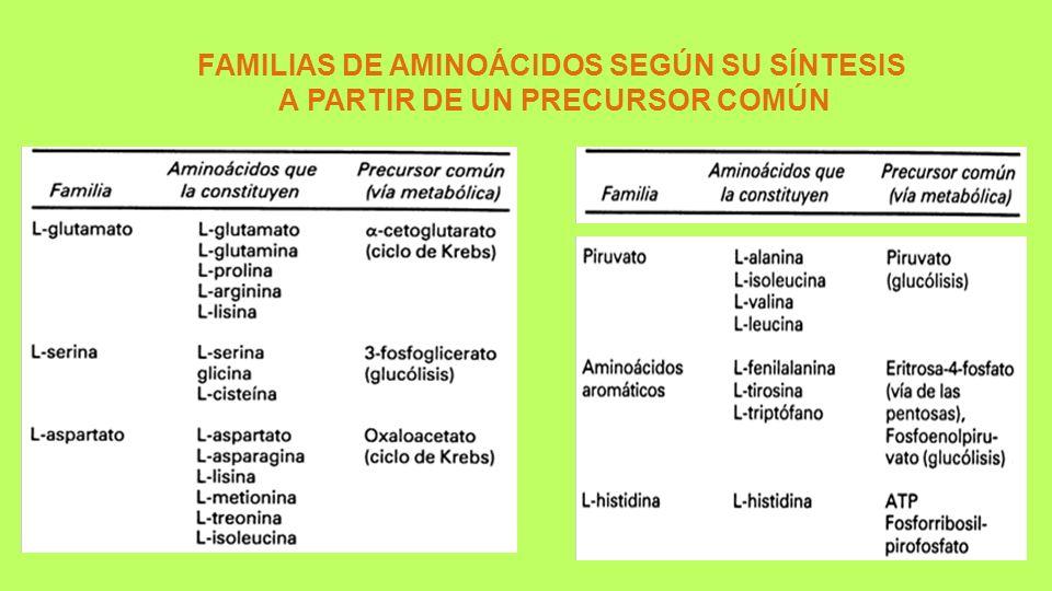 FAMILIAS DE AMINOÁCIDOS SEGÚN SU SÍNTESIS