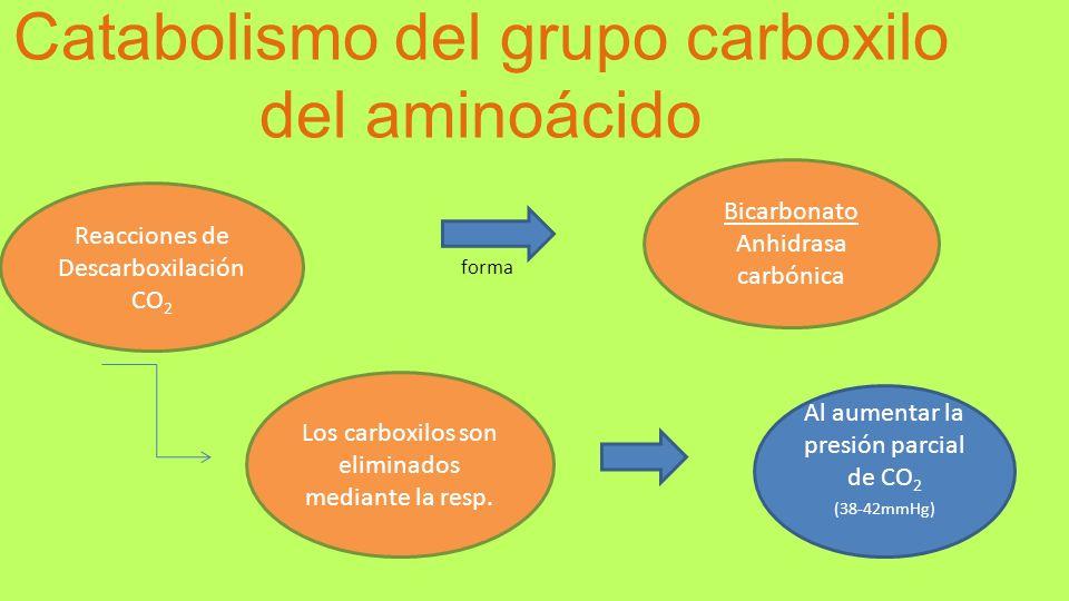 Catabolismo del grupo carboxilo del aminoácido