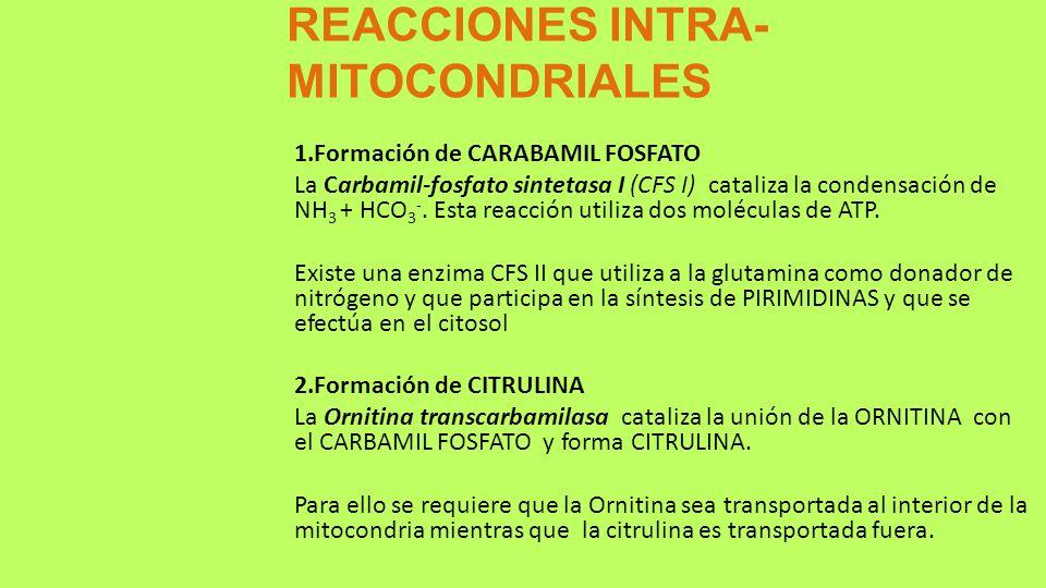 REACCIONES INTRA-MITOCONDRIALES