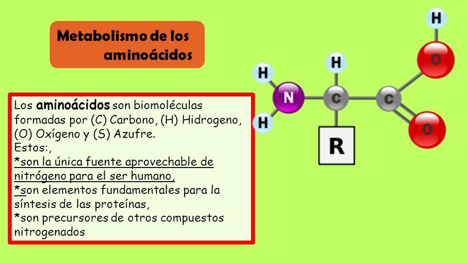 Metabolismo de los aminoácidos