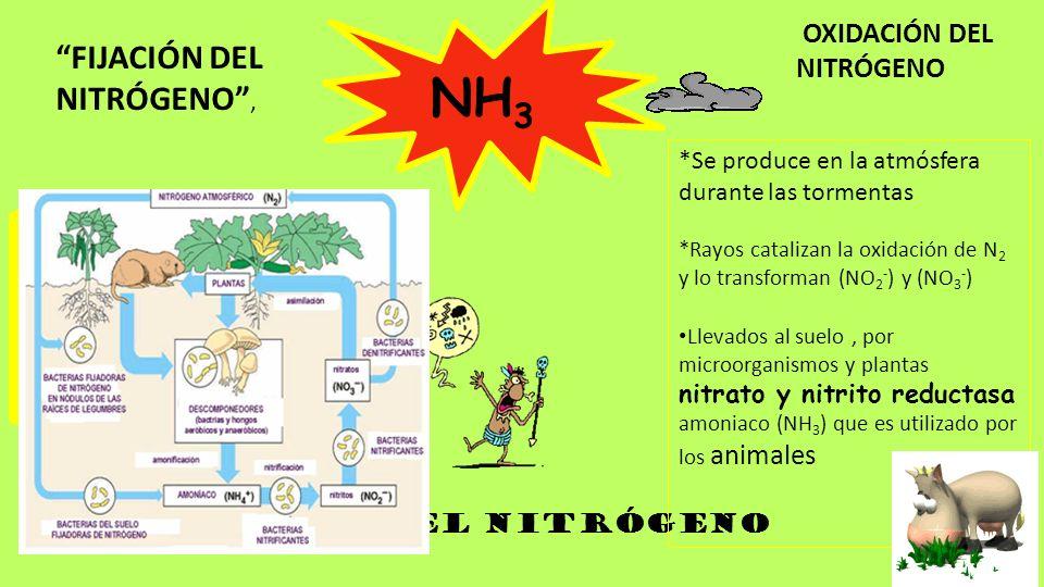 NH3 FIJACIÓN DEL NITRÓGENO , OXIDACIÓN DEL NITRÓGENO