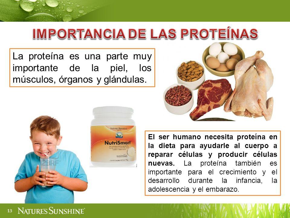 IMPORTANCIA DE LAS PROTEÍNAS