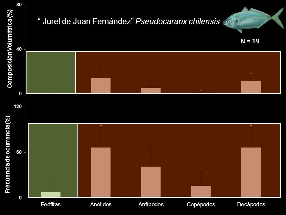 Jurel de Juan Fernández Pseudocaranx chilensis