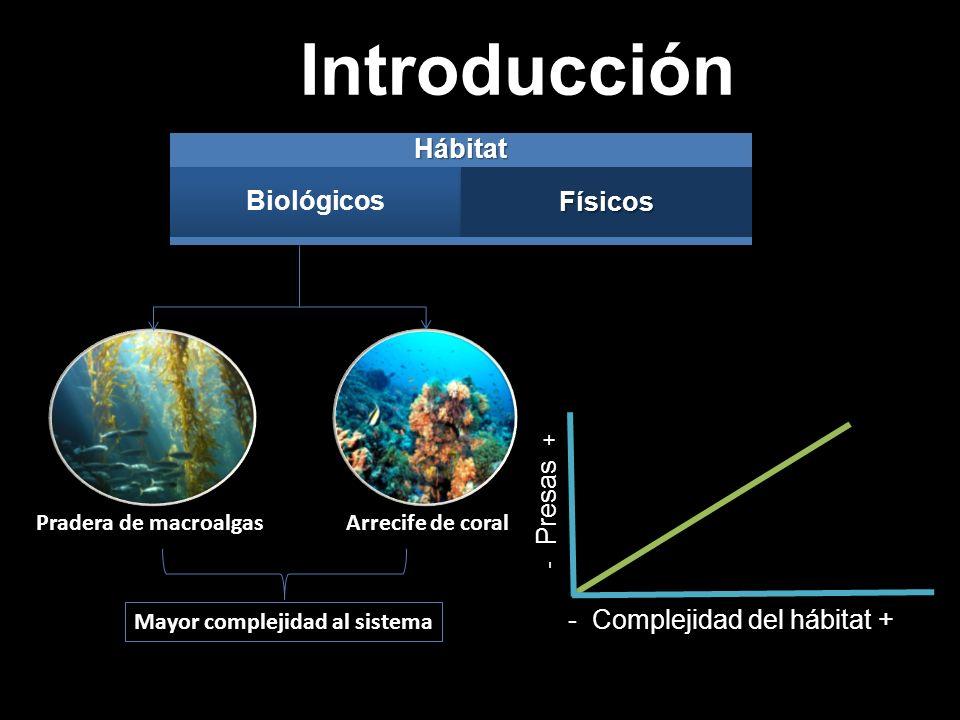Introducción Hábitat Biológicos Físicos - Complejidad del hábitat +