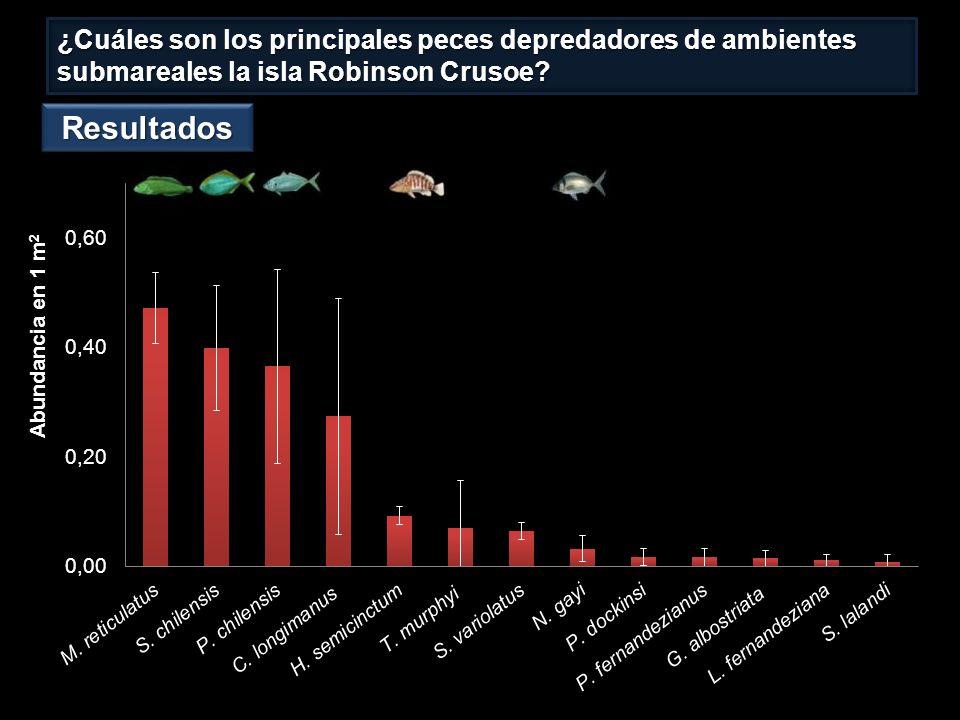 ¿Cuáles son los principales peces depredadores de ambientes submareales la isla Robinson Crusoe