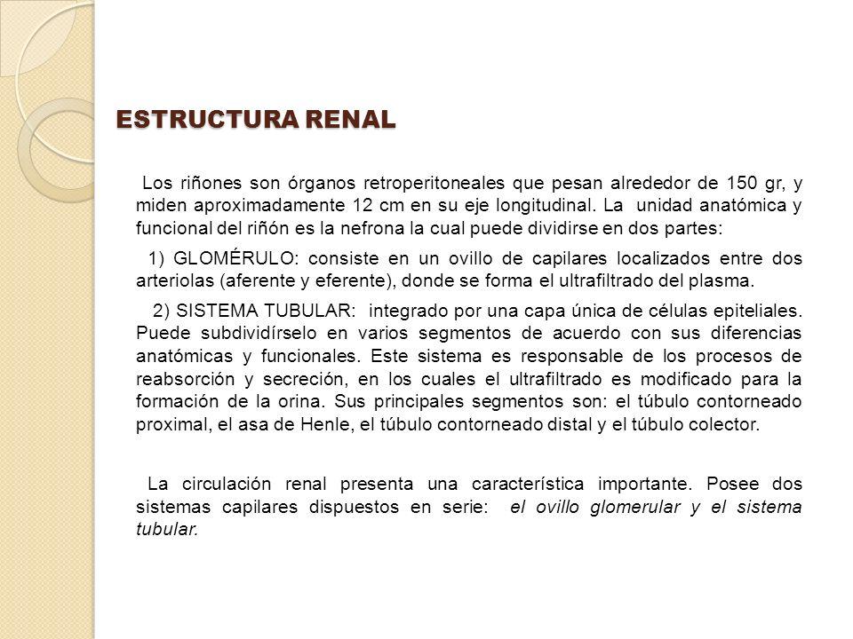 ESTRUCTURA RENAL