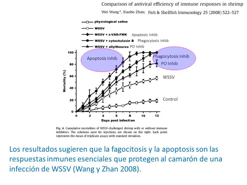 Apoptosis Inhib Phagocytosis Inhib. PO Inhib. Phagocytosis Inhib. Apoptosis Inhib. PO Inhib. WSSV.