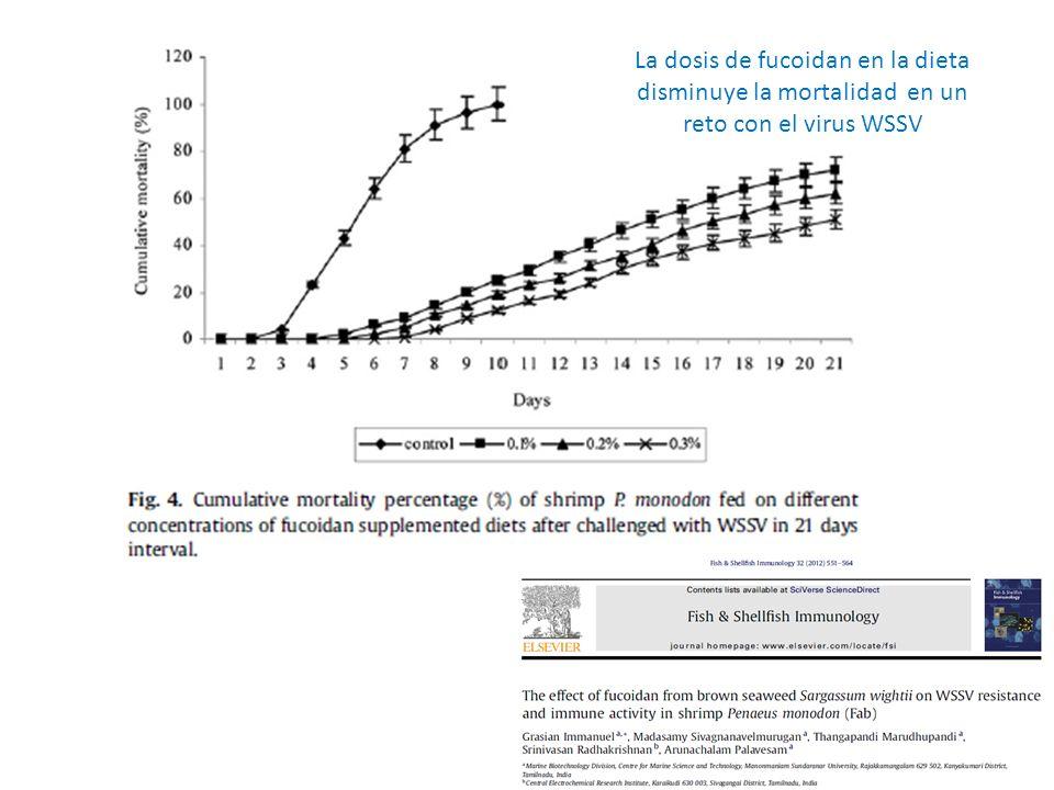 La dosis de fucoidan en la dieta disminuye la mortalidad en un reto con el virus WSSV