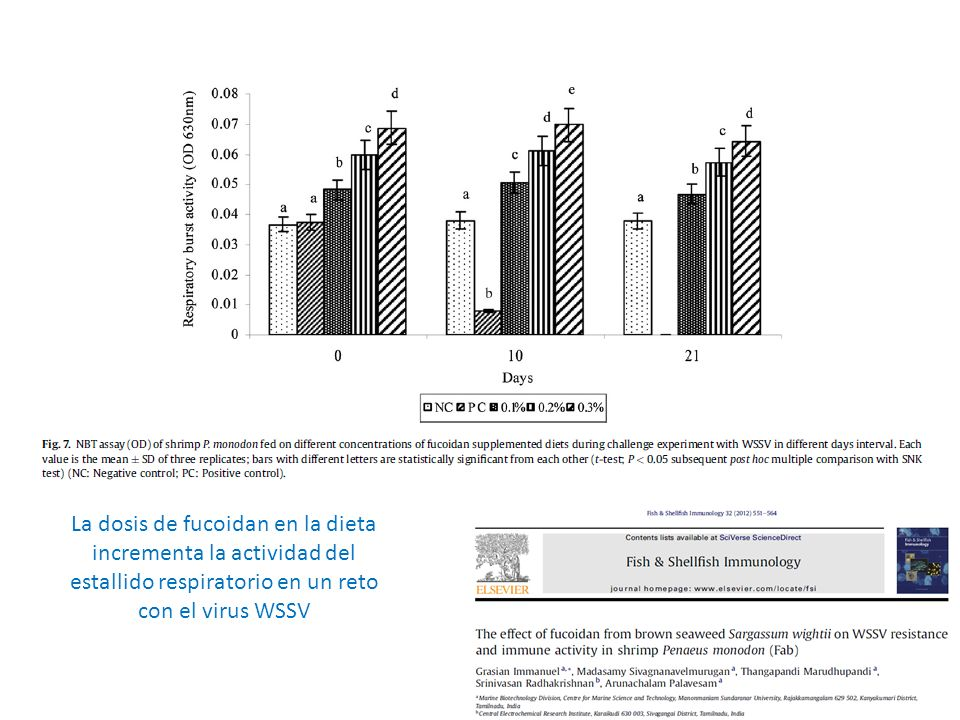 La dosis de fucoidan en la dieta incrementa la actividad del estallido respiratorio en un reto con el virus WSSV