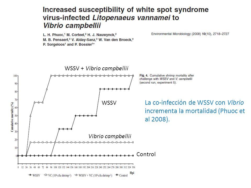 WSSV + Vibrio campbellii