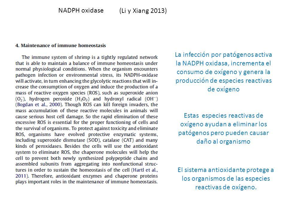 NADPH oxidase (Li y Xiang 2013)