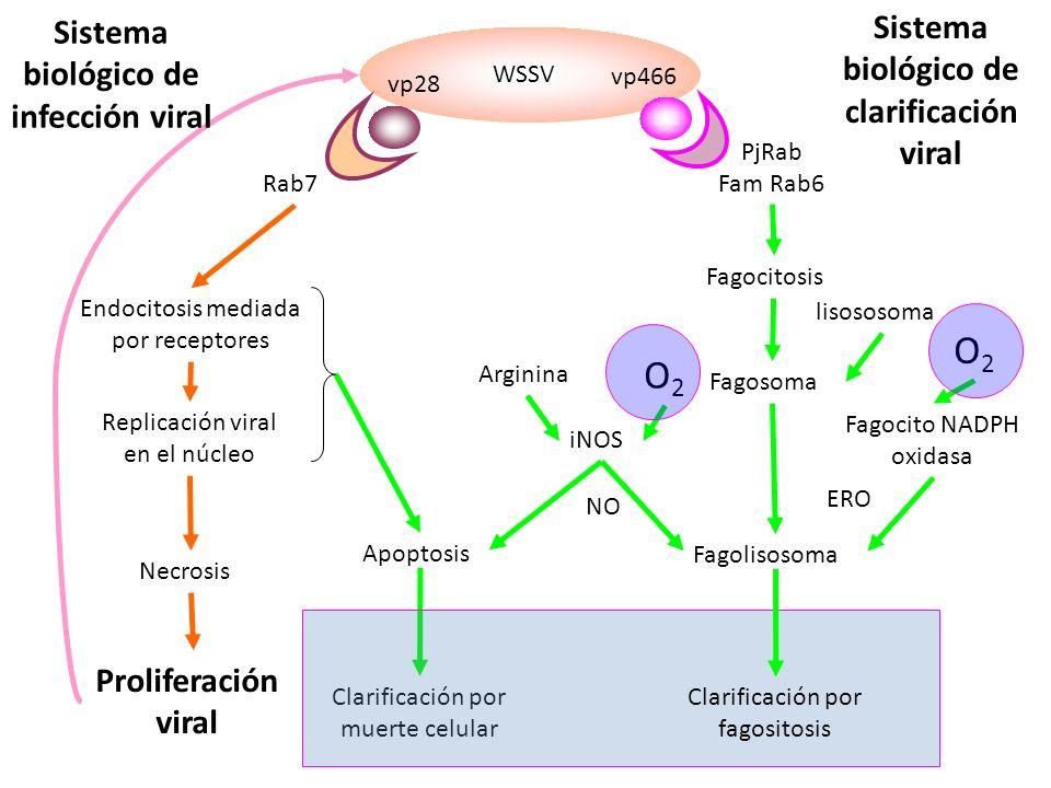 O2 O2 Sistema biológico de clarificación viral