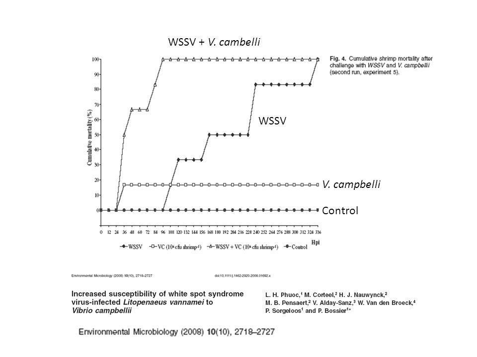 WSSV + V. cambelli WSSV V. campbelli Control