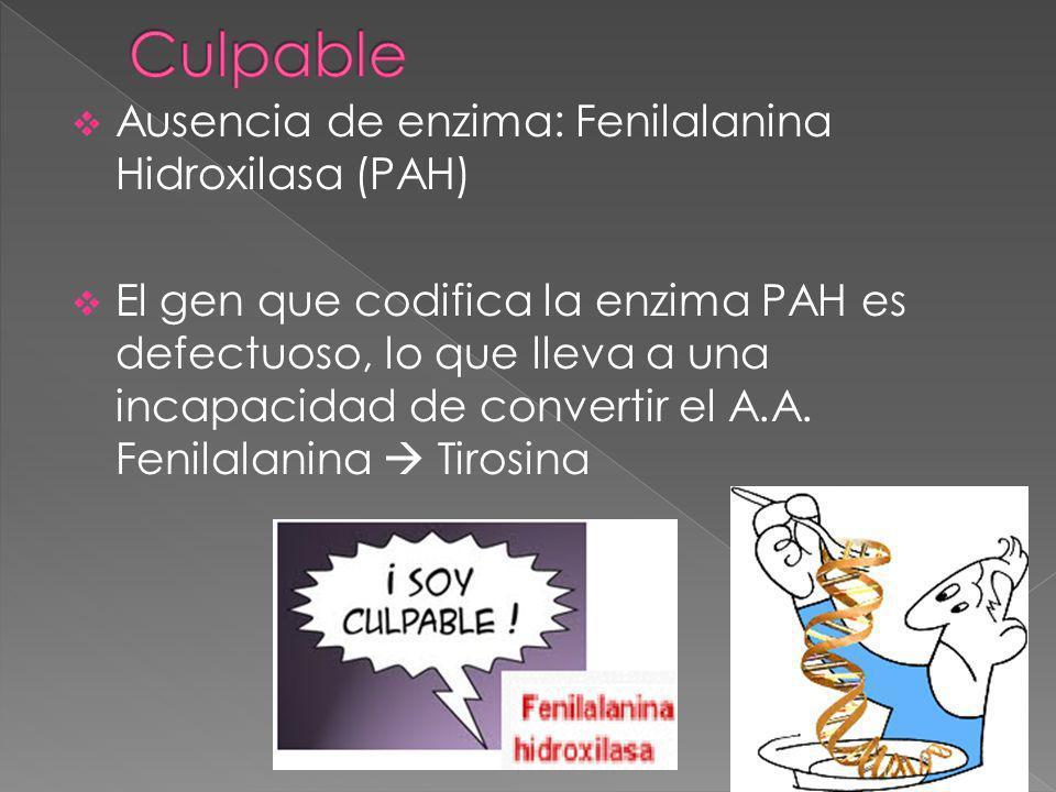Culpable Ausencia de enzima: Fenilalanina Hidroxilasa (PAH)