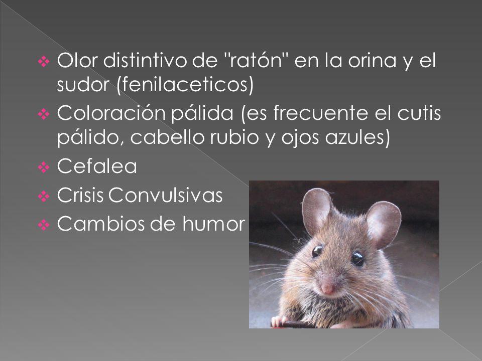 Olor distintivo de ratón en la orina y el sudor (fenilaceticos)