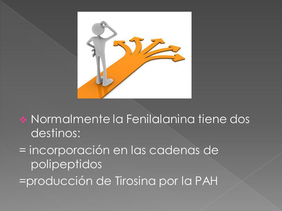 Normalmente la Fenilalanina tiene dos destinos: