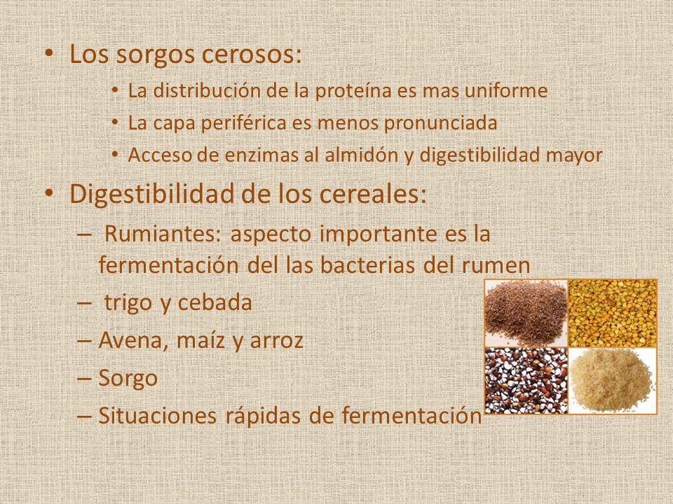 Digestibilidad de los cereales: