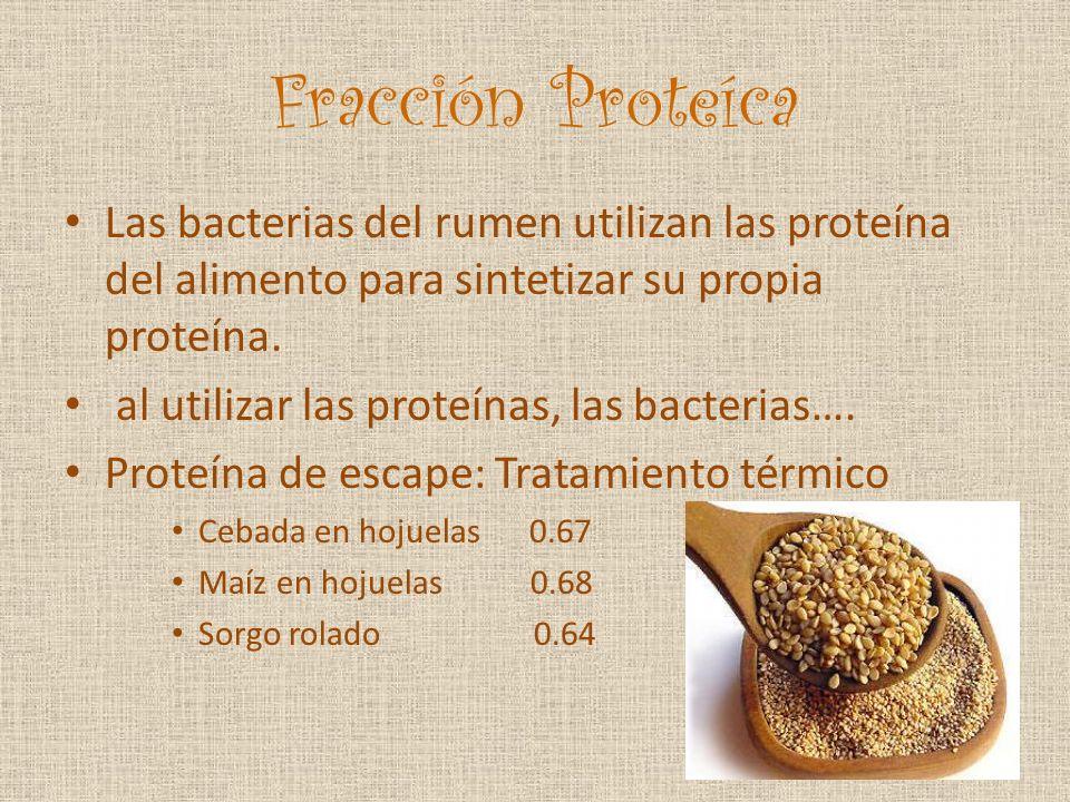 Fracción Proteíca Las bacterias del rumen utilizan las proteína del alimento para sintetizar su propia proteína.