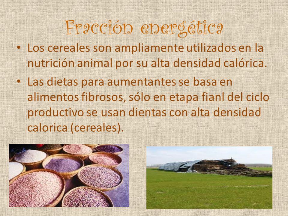 Fracción energética Los cereales son ampliamente utilizados en la nutrición animal por su alta densidad calórica.