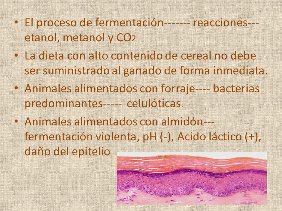 El proceso de fermentación------- reacciones--- etanol, metanol y CO2