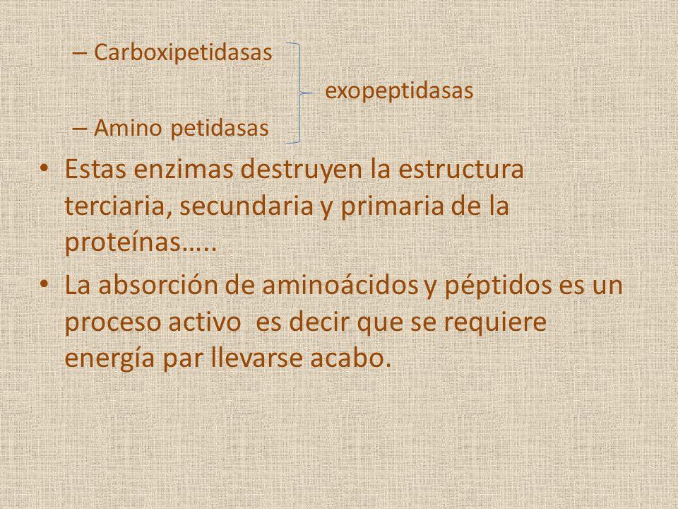 Carboxipetidasas exopeptidasas. Amino petidasas. Estas enzimas destruyen la estructura terciaria, secundaria y primaria de la proteínas…..