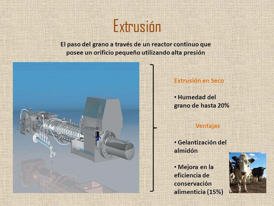 Extrusión El paso del grano a través de un reactor continuo que posee un orificio pequeño utilizando alta presión.