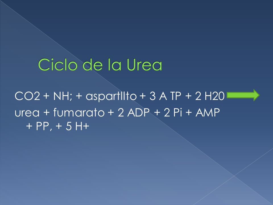 Ciclo de la Urea CO2 + NH; + aspartllto + 3 A TP + 2 H20