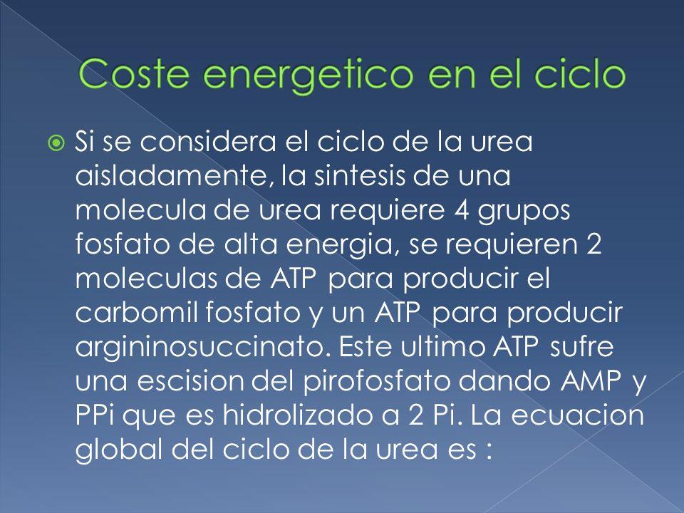 Coste energetico en el ciclo
