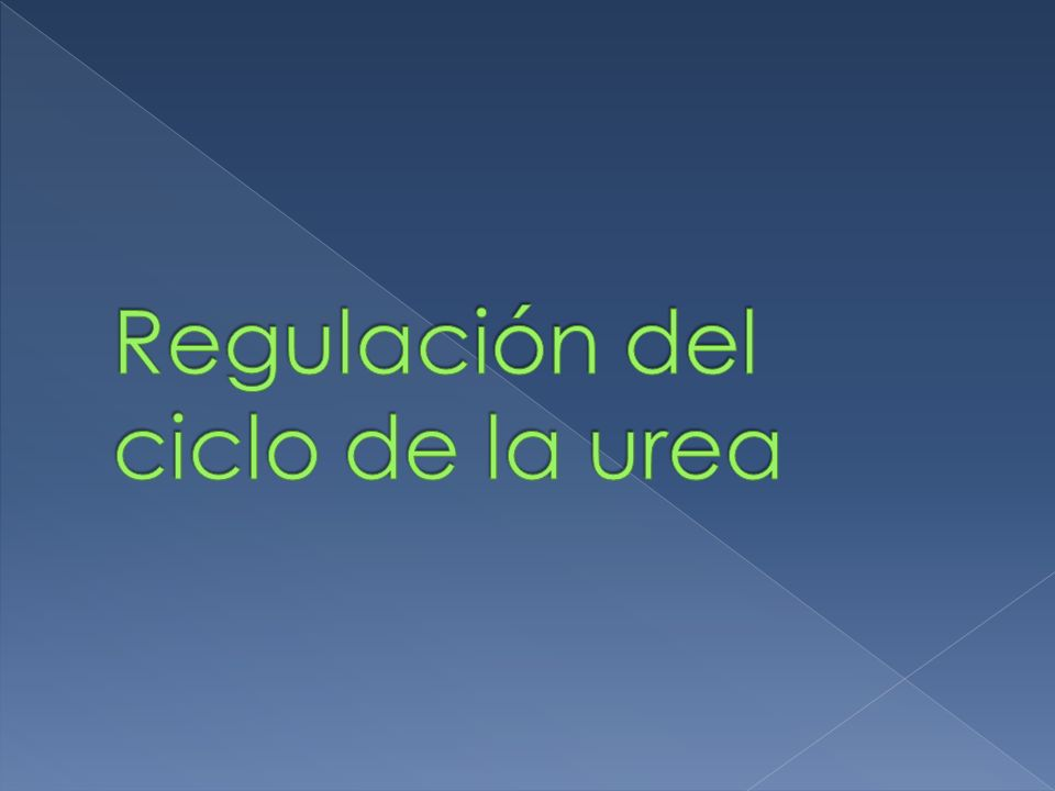 Regulación del ciclo de la urea
