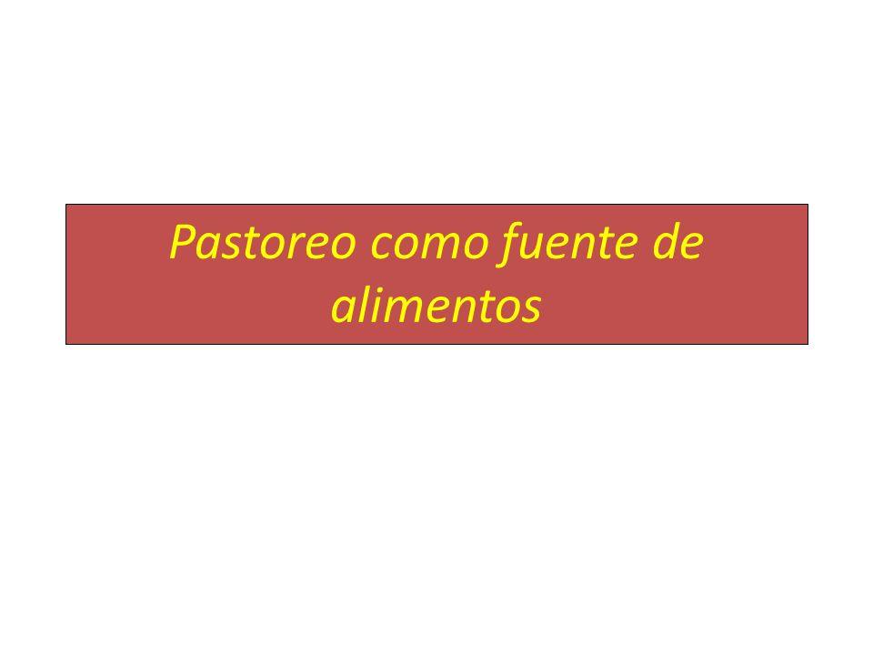 Pastoreo como fuente de alimentos