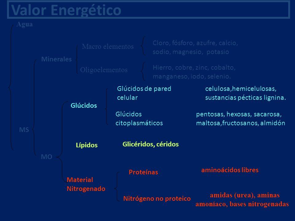 Valor Energético Agua MS Macro elementos