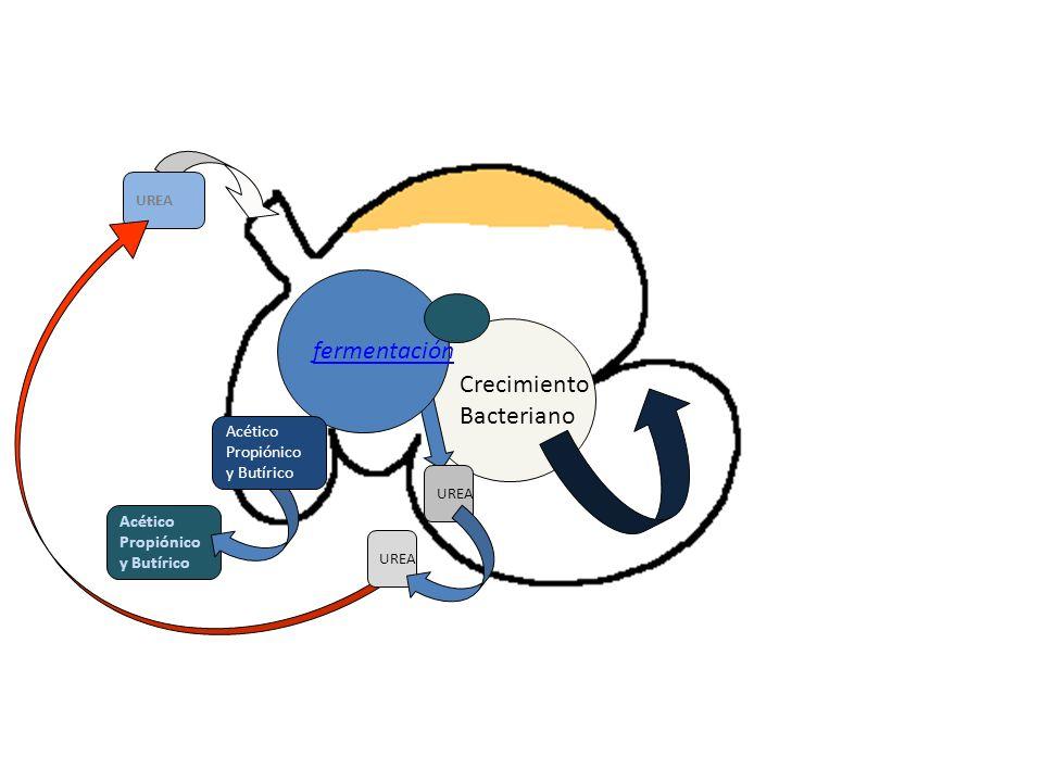 fermentación Crecimiento Bacteriano Acético Propiónico y Butírico