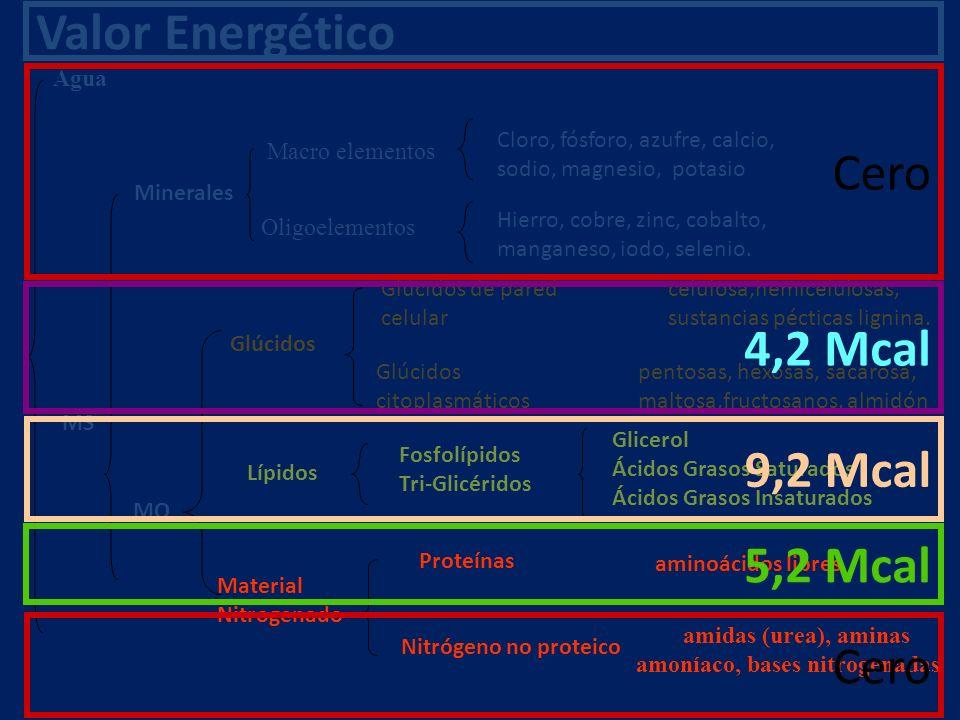 Valor Energético Cero 4,2 Mcal 9,2 Mcal 5,2 Mcal Cero Agua MS