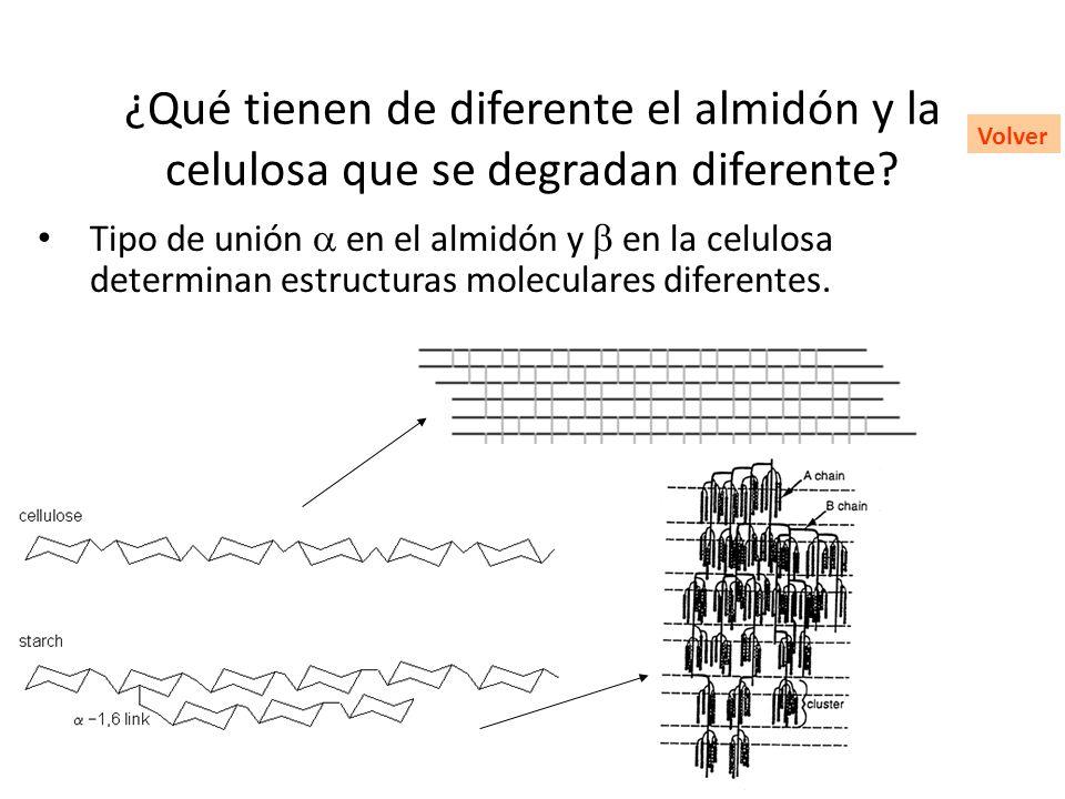 ¿Qué tienen de diferente el almidón y la celulosa que se degradan diferente