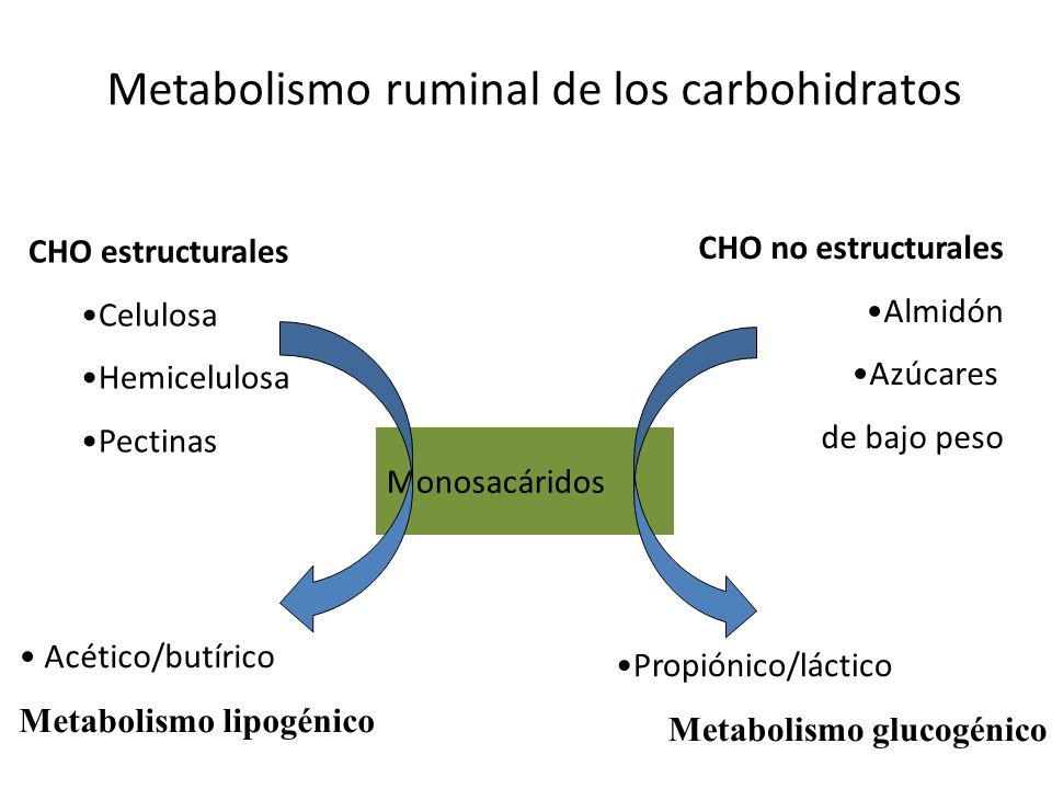 Metabolismo ruminal de los carbohidratos
