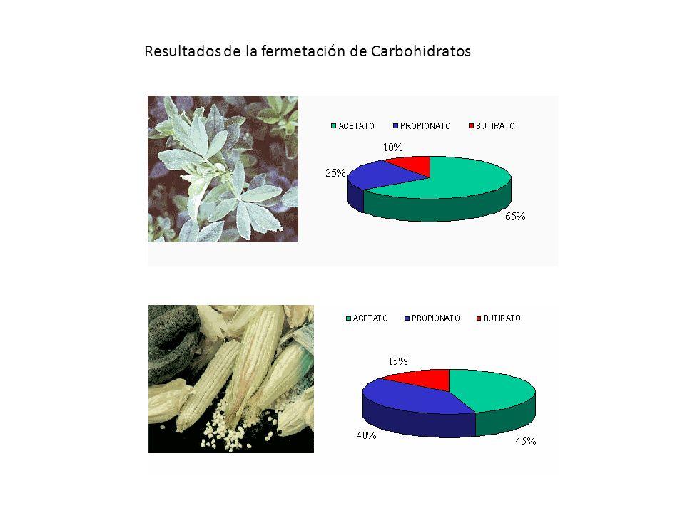 Resultados de la fermetación de Carbohidratos