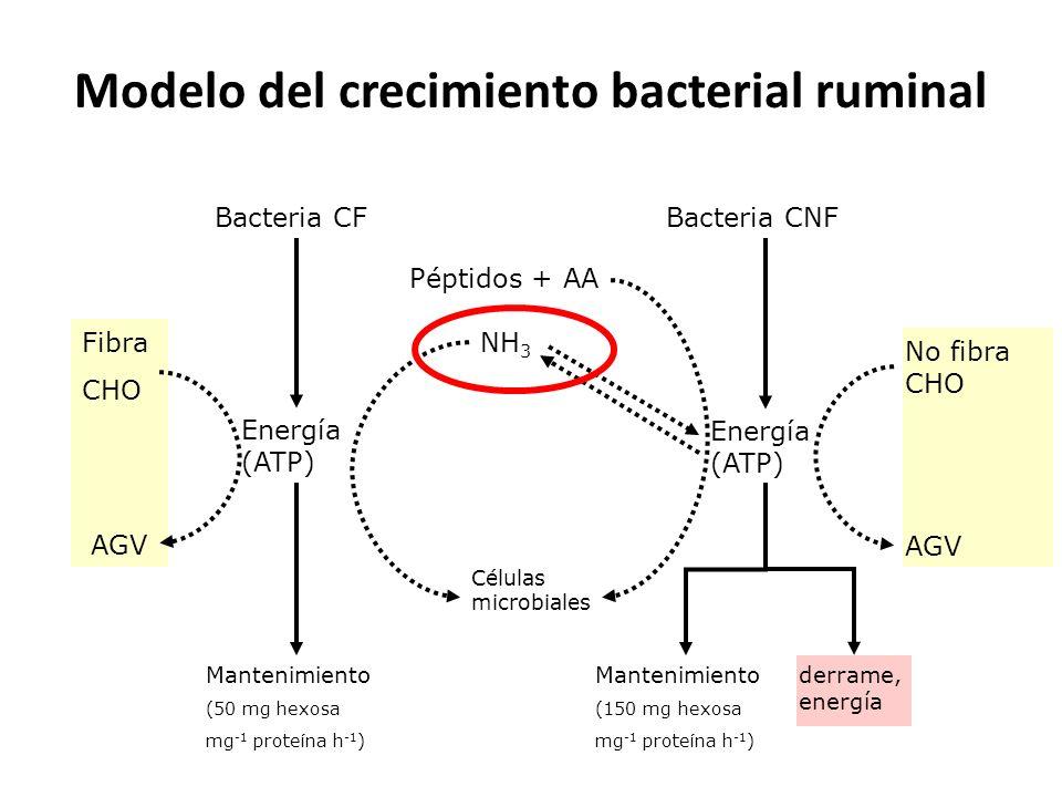 Modelo del crecimiento bacterial ruminal