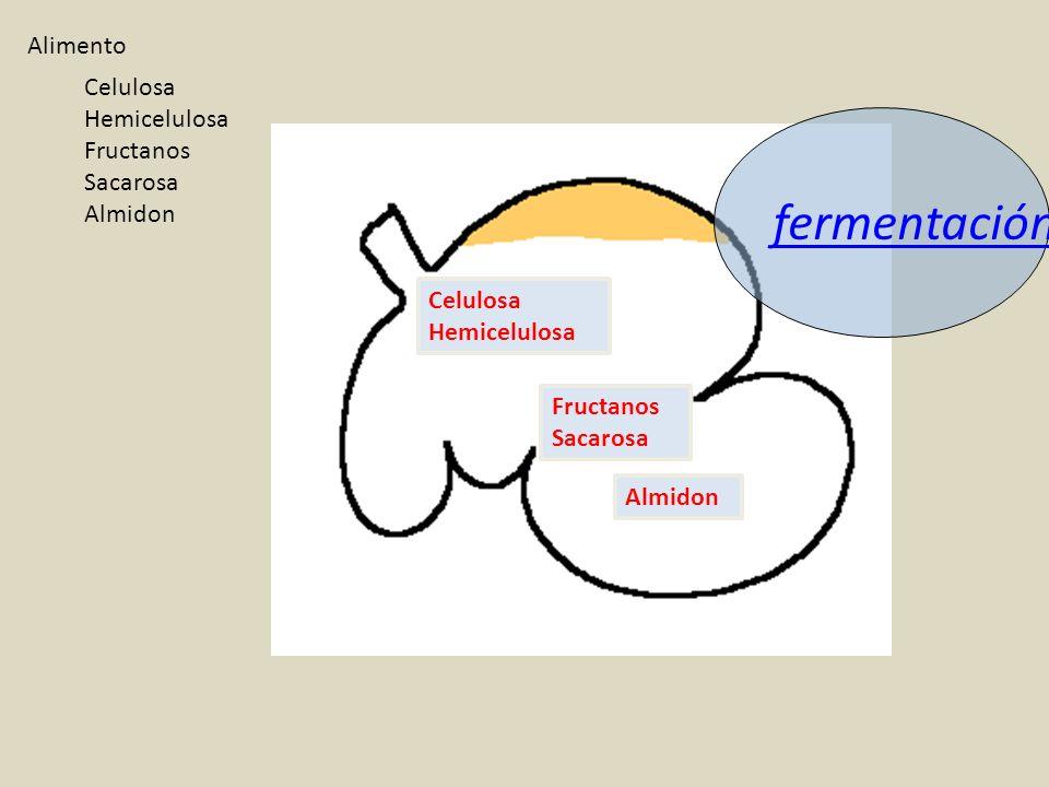 fermentación Alimento Celulosa Hemicelulosa Fructanos Sacarosa Almidon