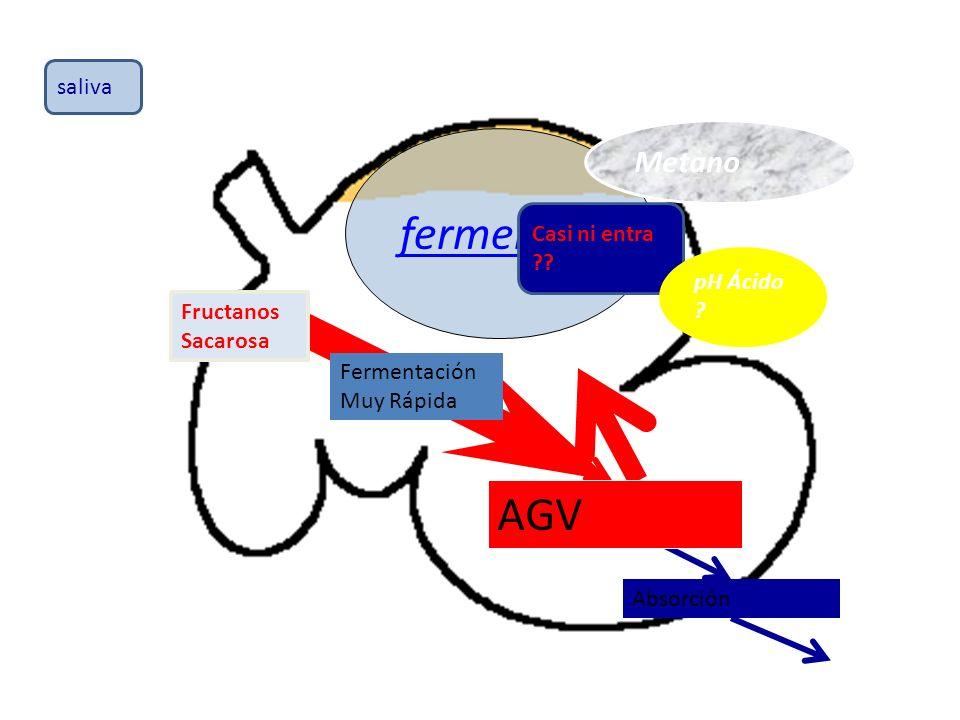fermentación AGV Metano saliva Casi ni entra pH Ácido Fructanos