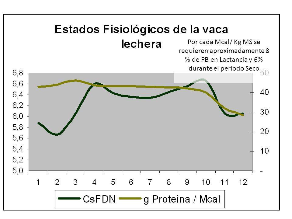 Por cada Mcal/ Kg MS se requieren aproximadamente 8 % de PB en Lactancia y 6% durante el periodo Seco