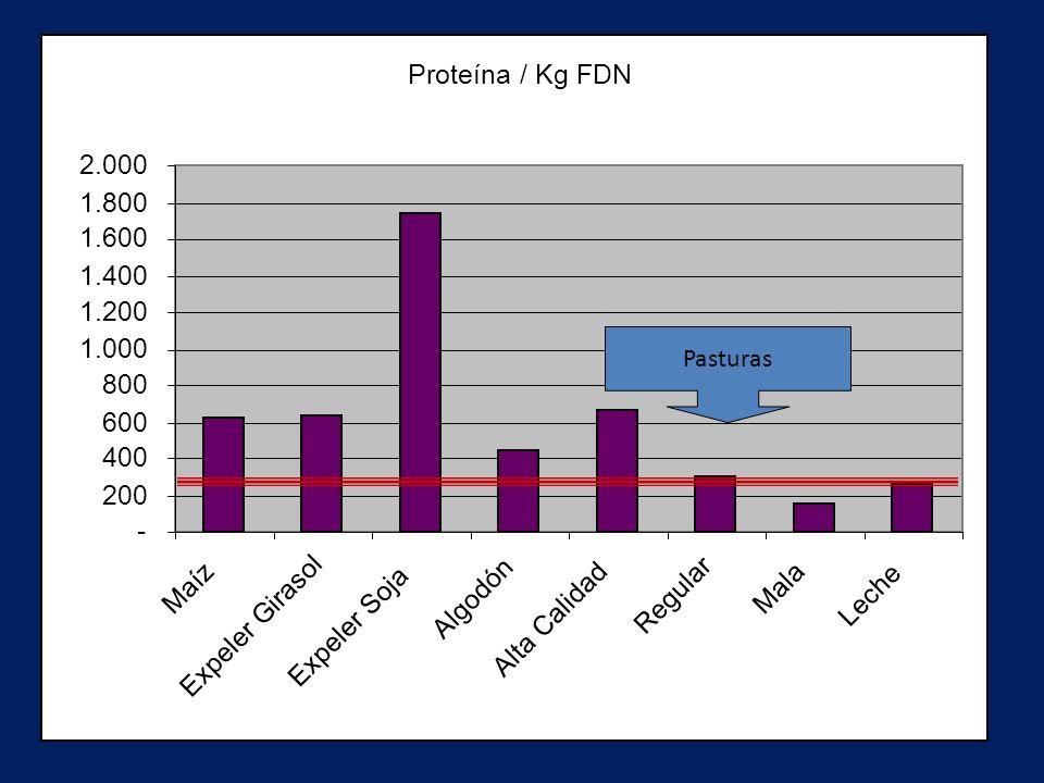Proteína / Kg FDN - 200. 400. 600. 800. 1.000. 1.200. 1.400. 1.600. 1.800. 2.000. Maíz. Expeler Girasol.
